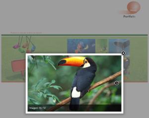 Wallace Vianna serviços de web design Rio de Janeiro RJ